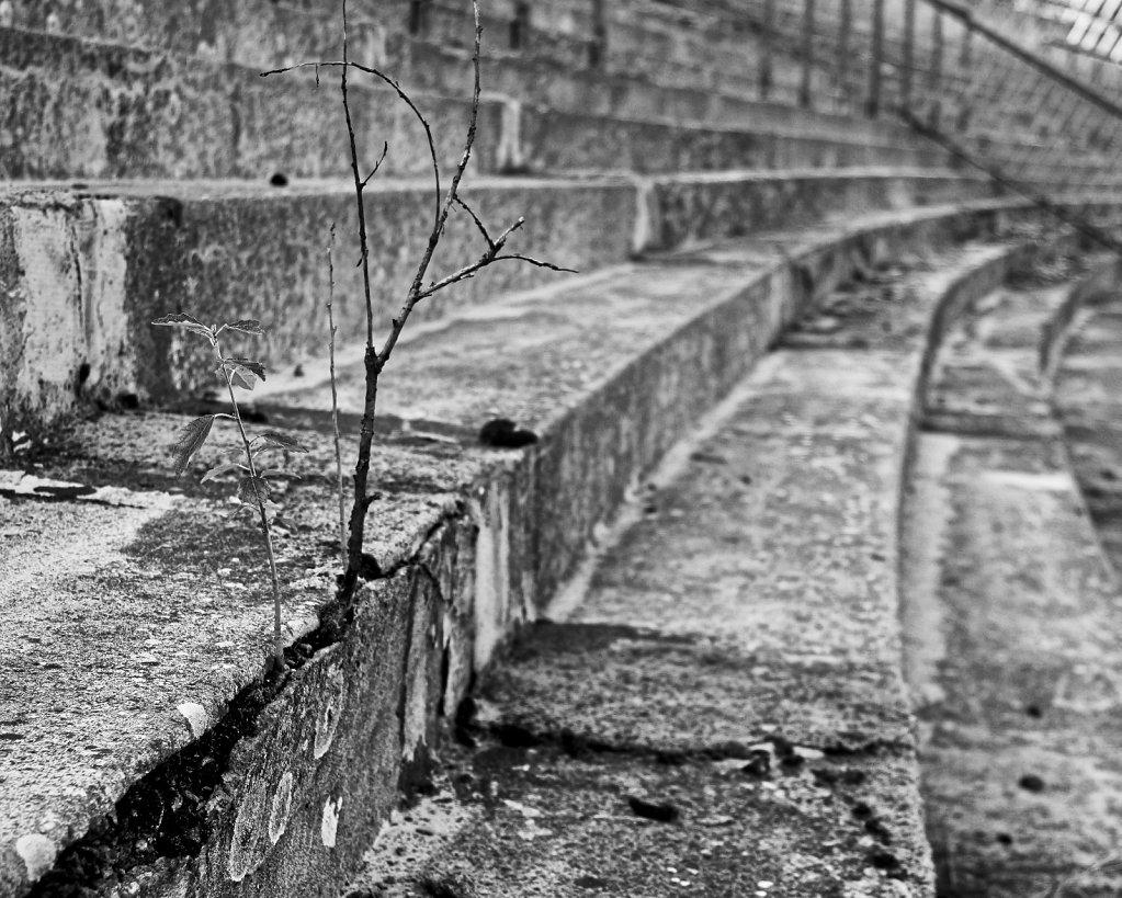 Zaluzanky - Stone & Wood